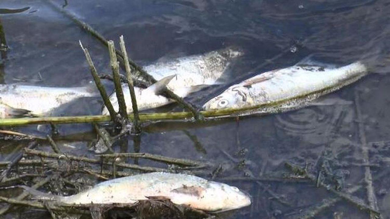 Alibeyköy Barajı'nda korkutan görüntü!