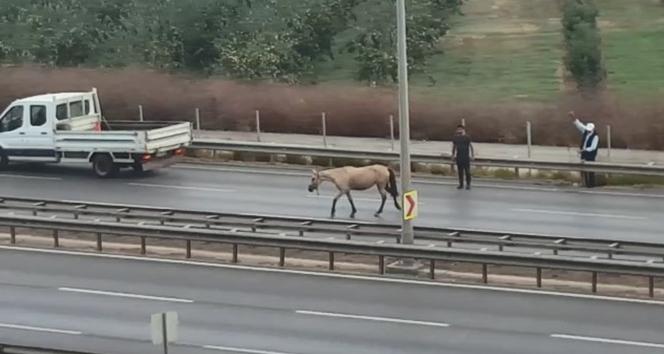 Bursa'da başı boş gezen at dehşet saçtı